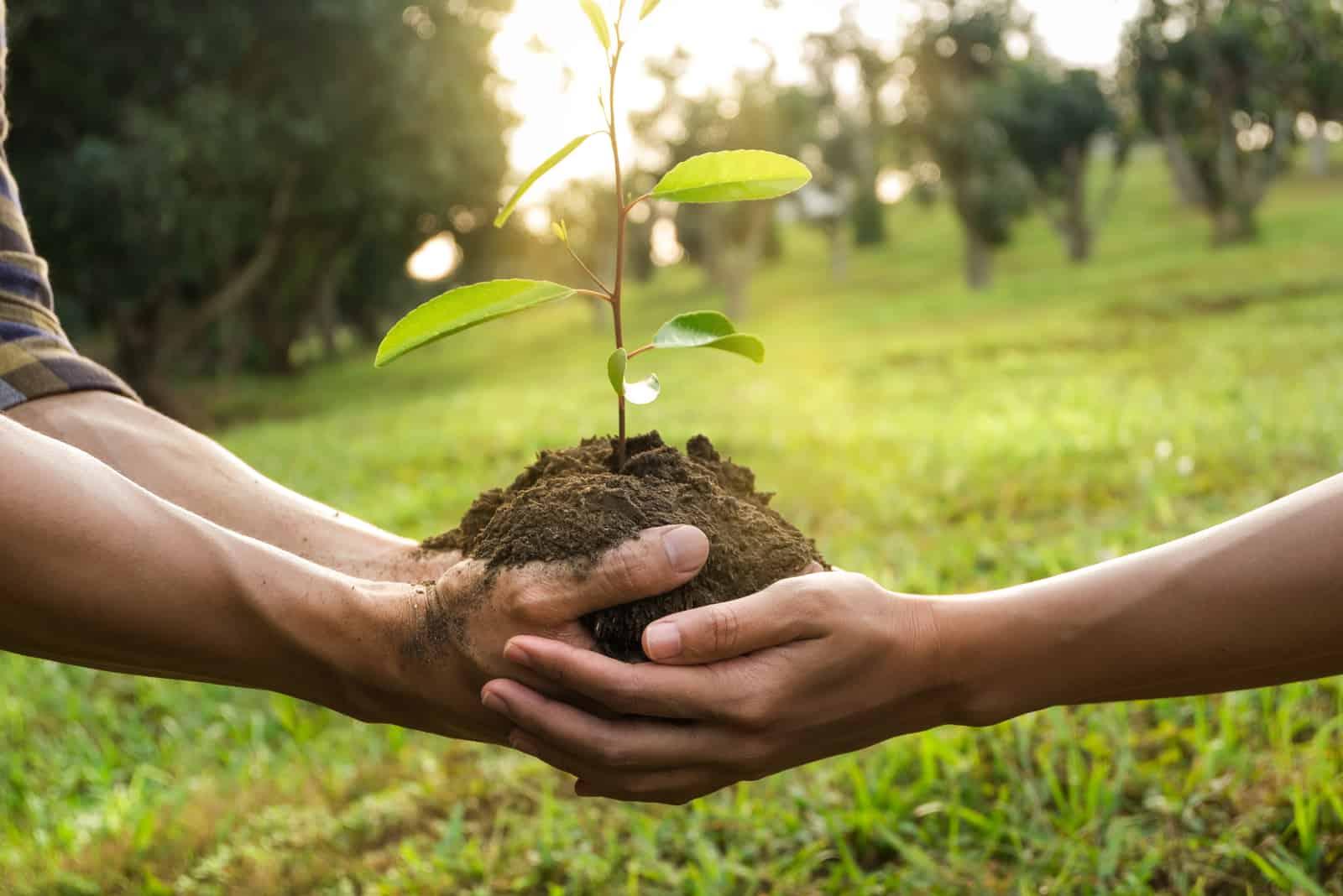 Paar Hände halten junge Baum vorbereitende Pflanze