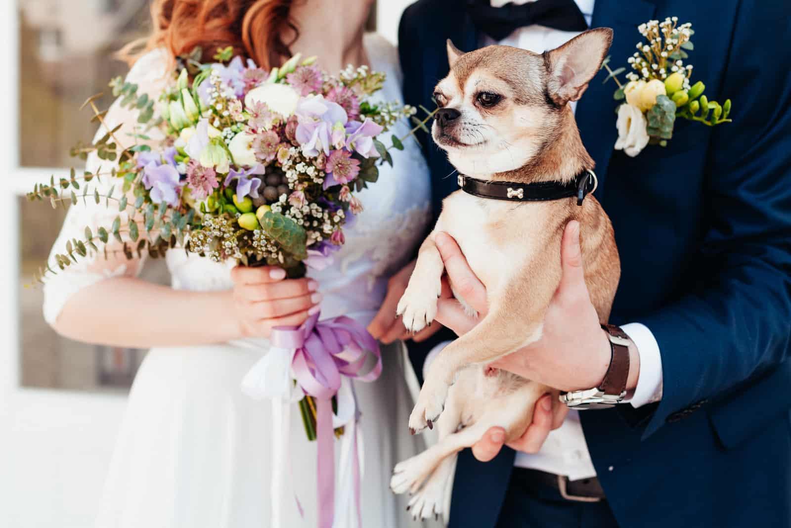Netter Hund bei der Hochzeit