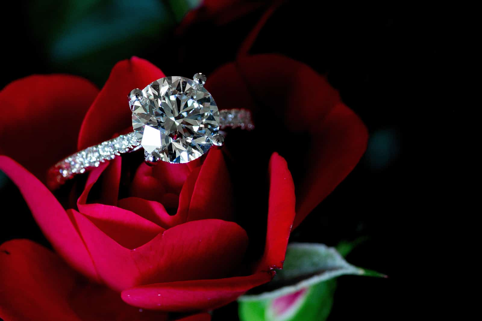 Platin-Diamantring auf roter Rose