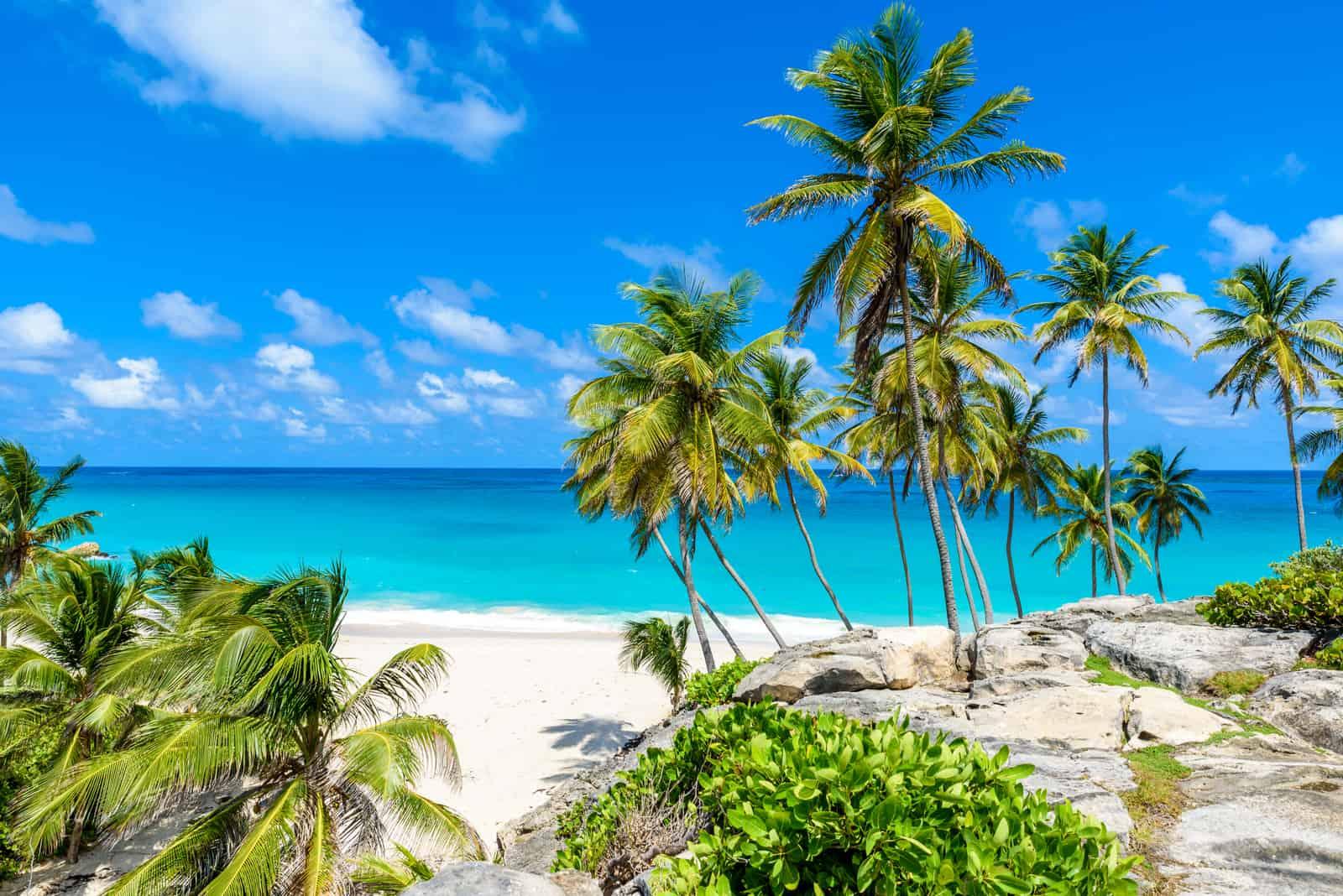 Paradiesstrand auf der Karibikinsel Barbados