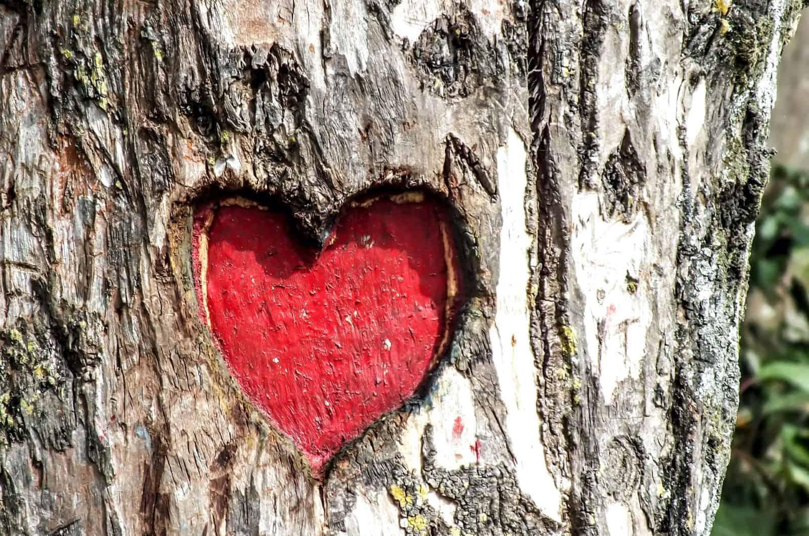 Herz in einen Baum gehauen