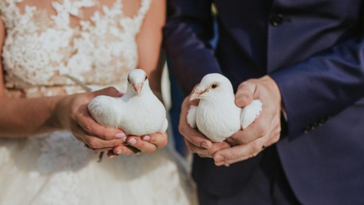 Hochzeitstauben: Romantischer Brauch oder Tierquälerei?